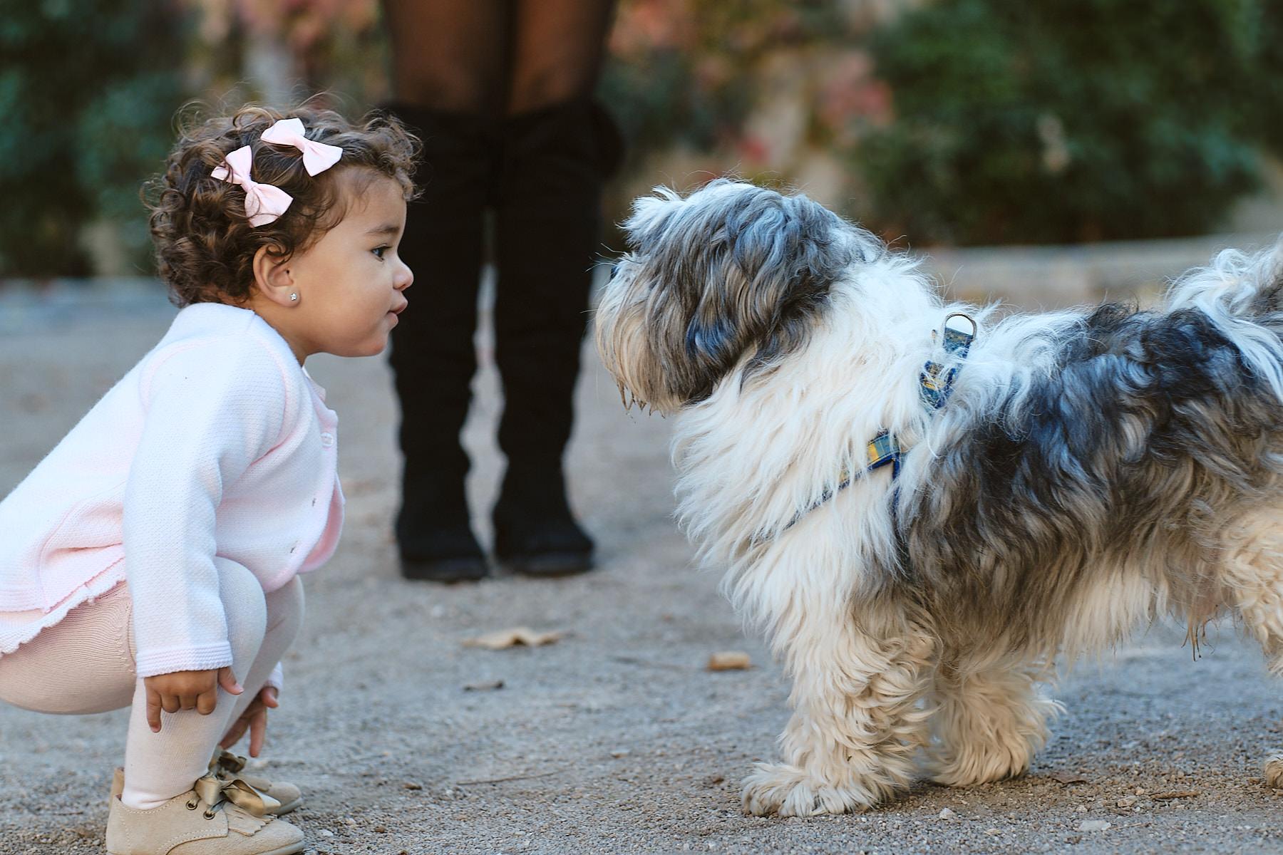 bebe curioseando con perro en parque